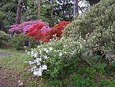 日本東北-新奧之細道溫泉之旅:P5140570.jpg