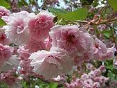 日本東北-新奧之細道溫泉之旅:P5120236.jpg