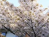 日本東北-新奧之細道溫泉之旅:P5130388.jpg