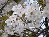 日本東北-新奧之細道溫泉之旅:P5130399.jpg