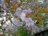 日本東北-新奧之細道溫泉之旅:P5130404.jpg