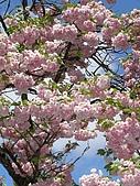 日本東北-新奧之細道溫泉之旅:P5130465.jpg