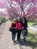 2013年新年踏春:苗栗山區的櫻花