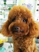 愛犬-妞妞:歡迎光臨