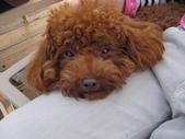 愛犬-妞妞:我真的累了
