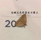 2016翻譯:蛾.jpg