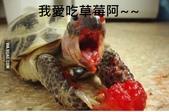 翻譯:吃草莓.jpg