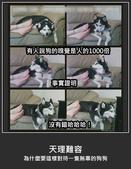 2016翻譯:狗.jpg