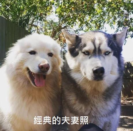 2016翻譯:經典.jpg