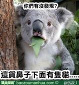 翻譯:貓.jpg