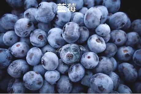 2016翻譯:藍莓.jpg