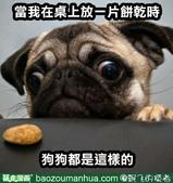 翻譯:餅乾.jpg