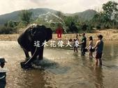 2016翻譯:大象.jpg