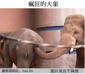 趣圖:大象.png