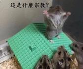 2016翻譯:老鼠.jpg