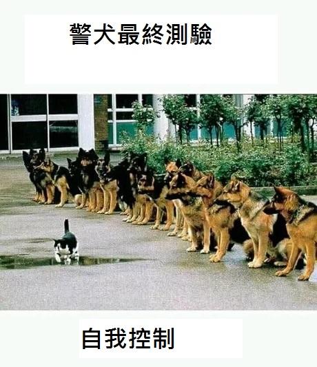 2016翻譯:警犬.jpg