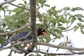 可愛的野鳥~郊野、公園健行隨意掠影看野鳥(四八):0127_0130.jpg