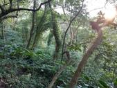 四獸山親山步道健行上拇指山:0412_0047.jpg