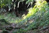 四獸山親山步道健行上拇指山:0412_0016.jpg