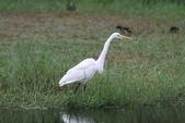 可愛的野鳥~郊野、公園健行隨意掠影看野鳥(四八):0127_0140.jpg