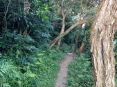 四獸山親山步道健行上拇指山:0412_0041.jpg