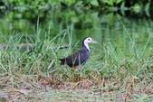 可愛的野鳥~郊野、公園健行隨意掠影看野鳥(四八):0127_0134.jpg