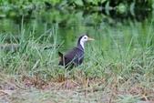 可愛的野鳥~郊野、公園健行隨意掠影看野鳥(四八):0127_0135.jpg