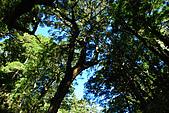 (嘉明湖 Day 2)向陽山屋->向陽山->嘉明湖避難小屋:DSC_7367.JPG