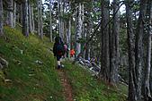 火石山~大南山鞍部營地(雪山西稜Day2):DSC_3464.JPG