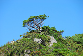 (嘉明湖 Day 2)向陽山屋->向陽山->嘉明湖避難小屋:DSC_7474.JPG