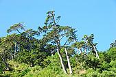 (嘉明湖 Day 2)向陽山屋->向陽山->嘉明湖避難小屋:DSC_7358.JPG