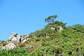 (嘉明湖 Day 2)向陽山屋->向陽山->嘉明湖避難小屋:DSC_7475.JPG