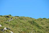 (嘉明湖 Day 2)向陽山屋->向陽山->嘉明湖避難小屋:DSC_7480.JPG