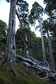 火石山~大南山鞍部營地(雪山西稜Day2):DSC_3477.JPG