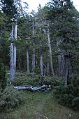 火石山~大南山鞍部營地(雪山西稜Day2):DSC_3482.JPG