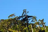 (嘉明湖 Day 2)向陽山屋->向陽山->嘉明湖避難小屋:DSC_7354.JPG