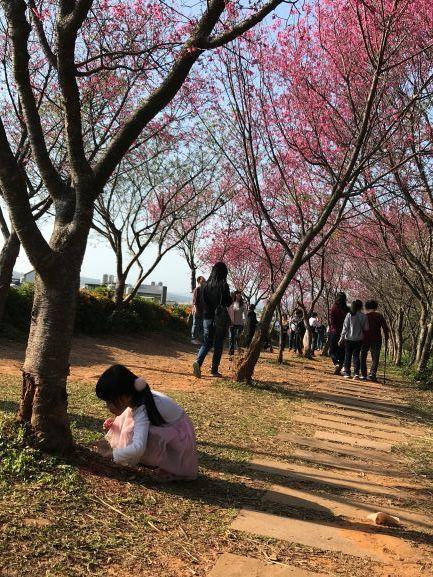 2018-20 blog photos:ting_自動車.JPG