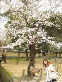 2009-京都大阪自由行:1670223774.jpg