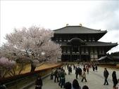 2009-京都大阪自由行:1670223778.jpg