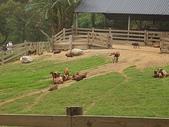 旅遊:飛牛牧場一景