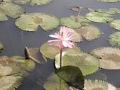旅遊:蓮花池一景