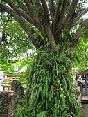 板橋 林家花園:DSCN0324.JPG