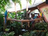 新加坡 裕廊飛禽公園:IMG_3289.JPG