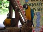 新加坡 裕廊飛禽公園:IMG_3290.JPG