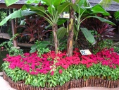 新加坡 裕廊飛禽公園:IMG_3295.JPG