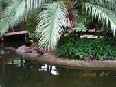 新加坡 裕廊飛禽公園:IMG_3296.JPG