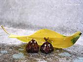 雜七雜八堆疊相片:躲雨~甜甜蜜蜜