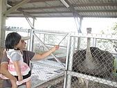 2009-04-25乳牛之家:DSC04531.JPG