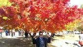 2013-10-25到2013-10-29 韓國之旅:IMAG5598.jpg