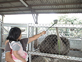 2009-04-25乳牛之家:DSC04535.JPG